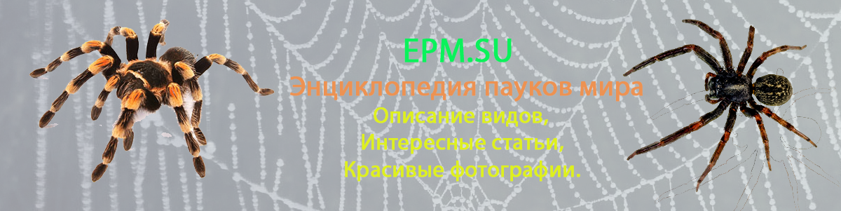 EPM.SU